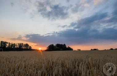 Erntezeit und Sonnenuntergang