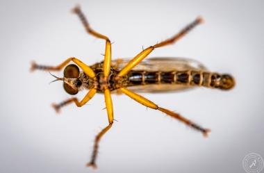 Insekten auf Glasscheibe