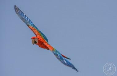 Papageien im Flug