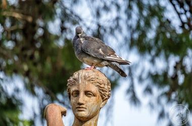 Die San Anton Gardens auf Malta
