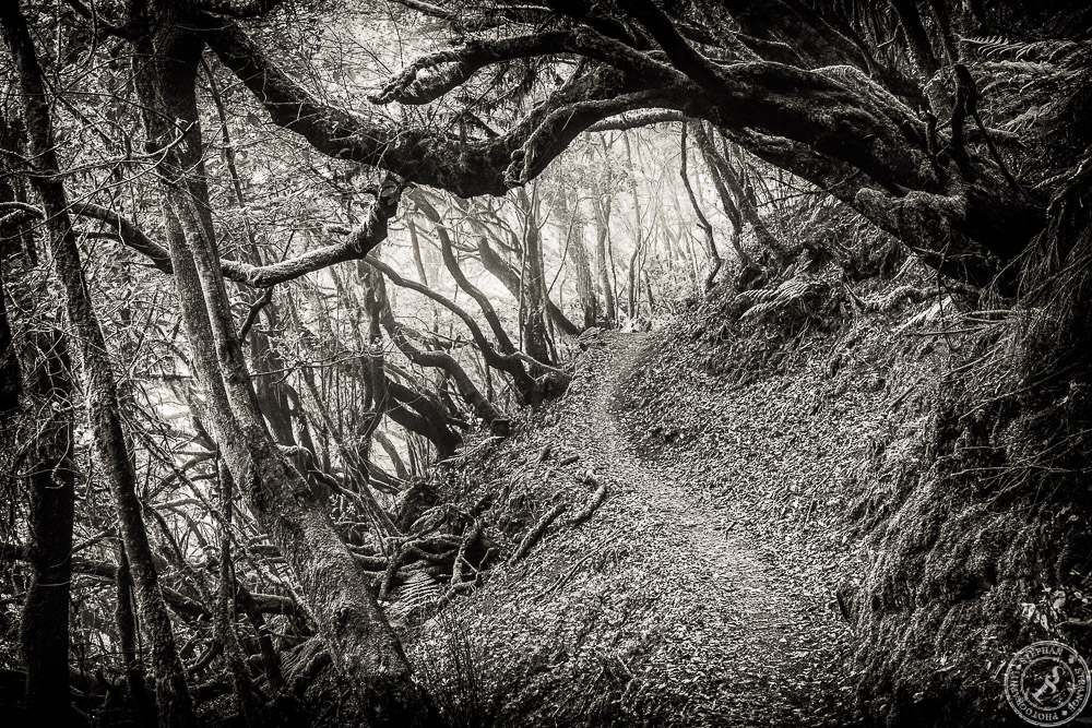 The fairytale forest of La Gomera