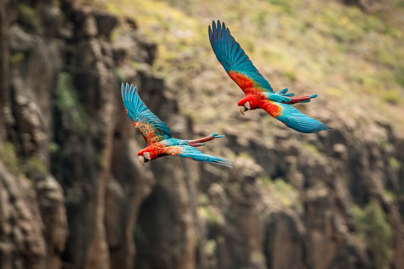 Exotic Birds free flight show Palmitos Park, Gran Canaria